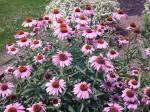 flowers, park